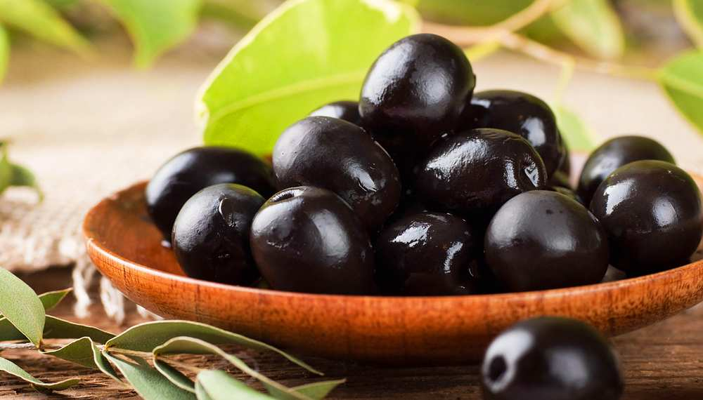 Can Dogs Eat Black Olives