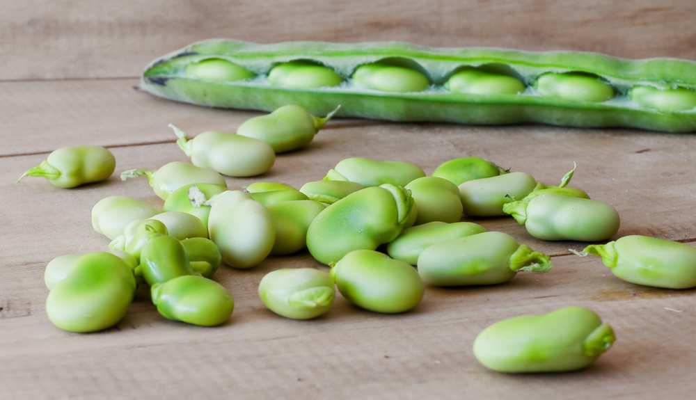 Can Dogs Eat Lima Beans