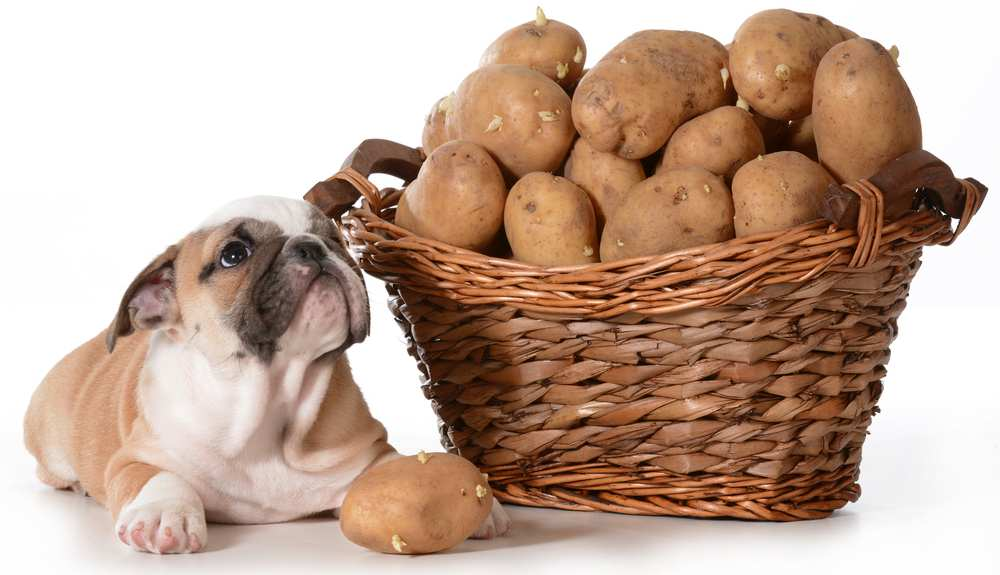 Can Dogs Eat Raw Potatoes