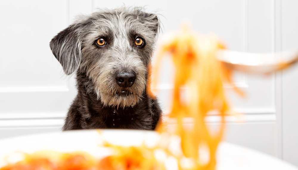 Can Dogs Eat Spaghetti