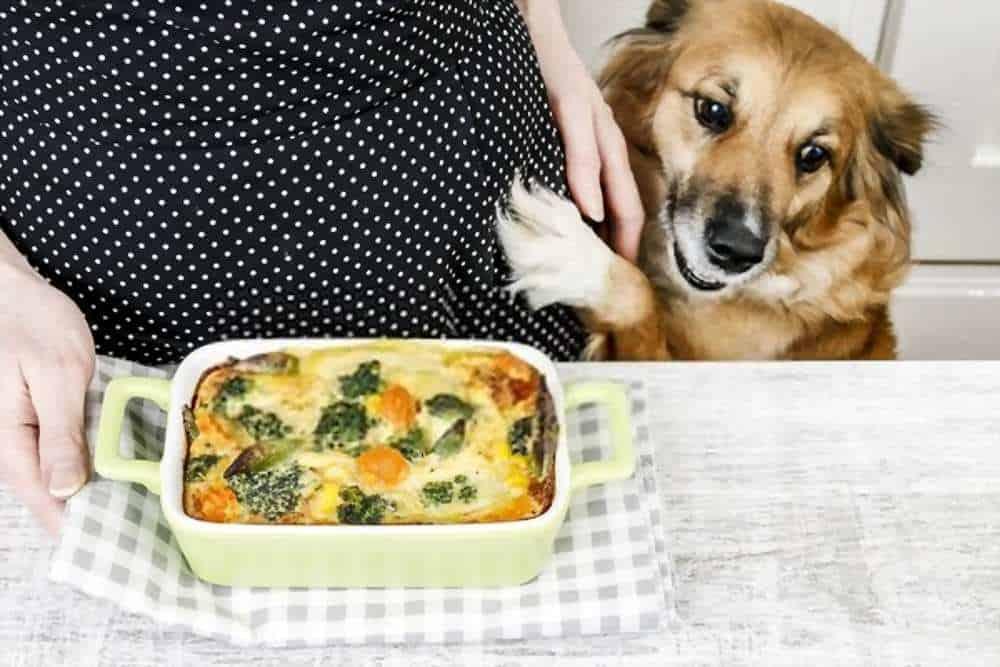 Can My Dogs Eat Cauliflower
