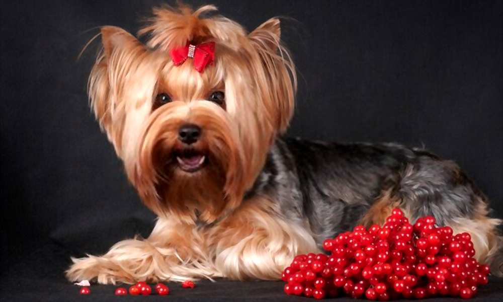 Can My Dogs Eat Cranberries