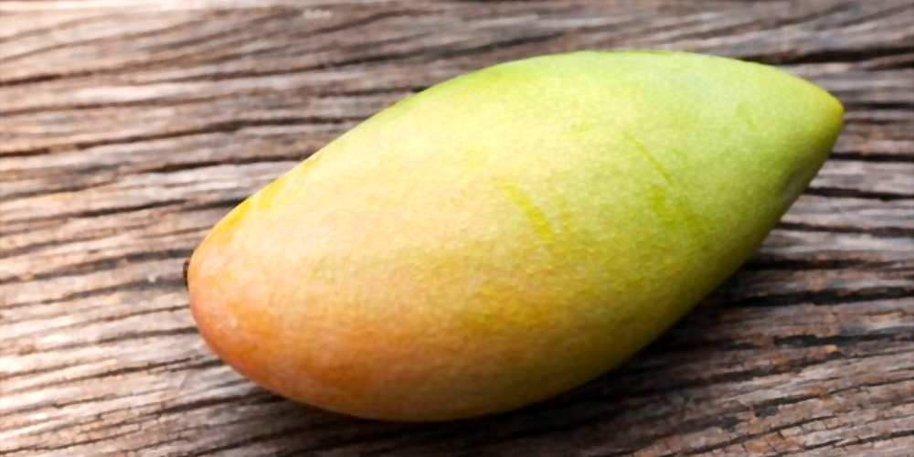 Can My Dogs Eat Mango