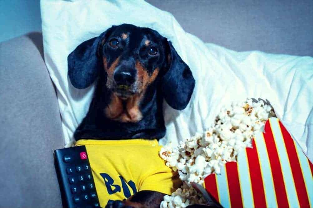 Can My Dogs Eat Popcorn