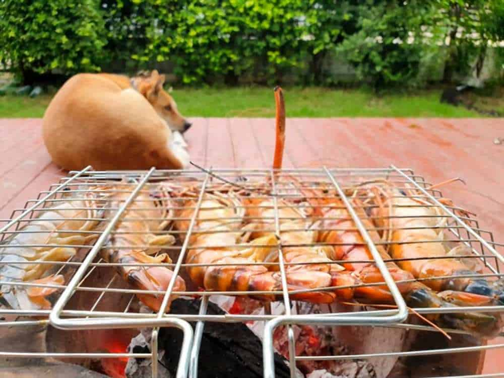 Can My Dogs Eat Shrimp