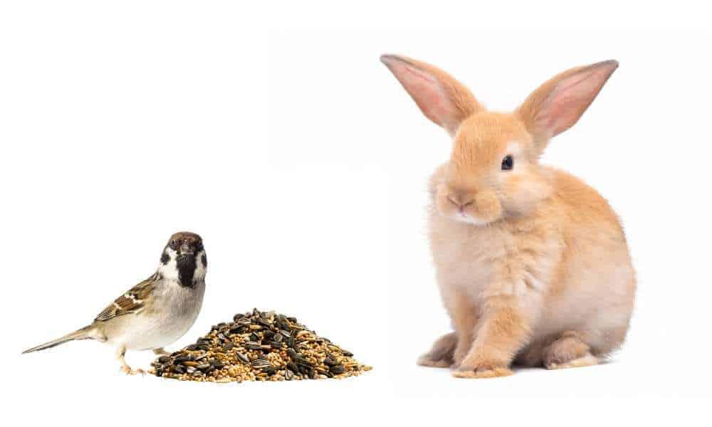 Pueden los conejos comer semillas de aves