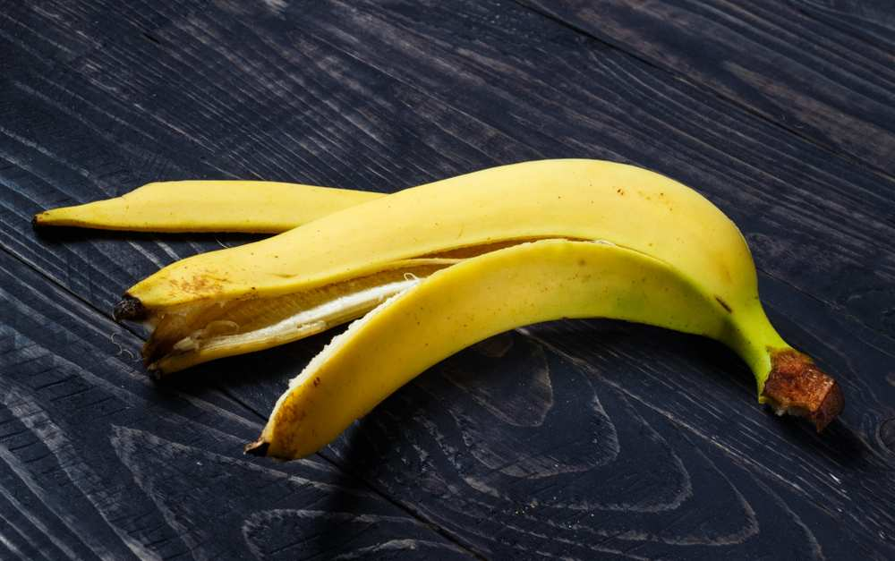 Dh Can Dogs Eat Banana Peels