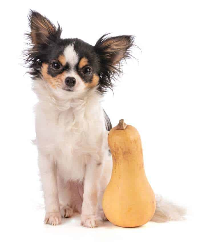 Dh Can Dogs Eat Butternut Squash