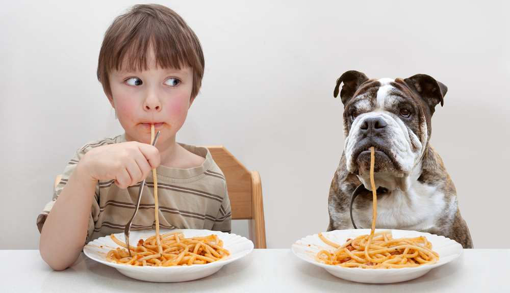 Dh Can Dogs Eat Pasta