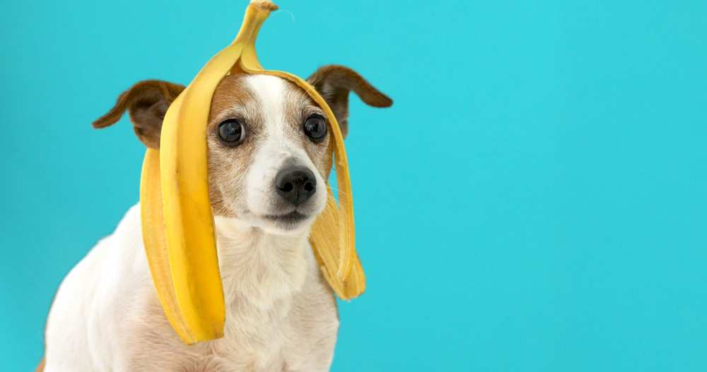 Dh Can Dogs Eat Plantains