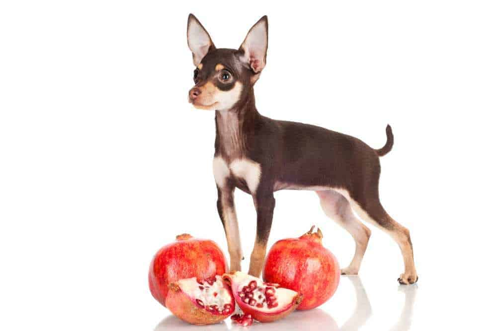 Dh Can Dogs Eat Pomegranate