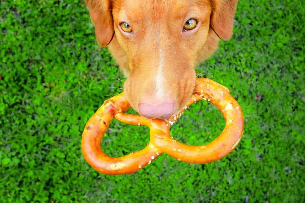 Dh Can Dogs Eat Pretzels