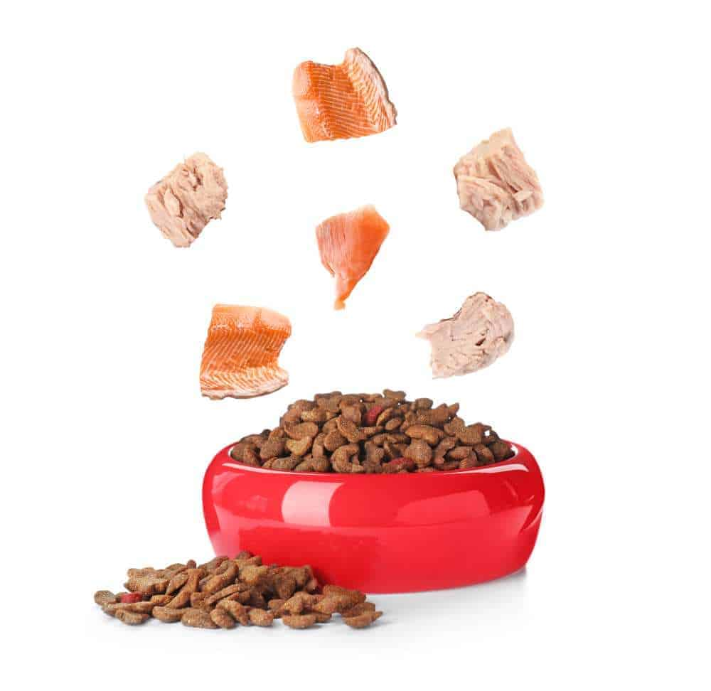 Dh Can Dogs Eat Tuna Fish